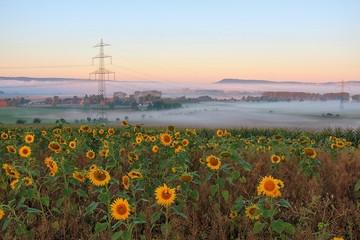 Sonnenblumen und Nebel in der Landschaft