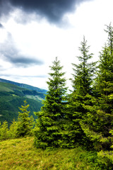 Beautiful alpine landscape with pines