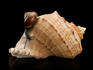 Snail and a cockleshell