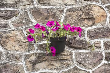Planta colgada en pared de piedra