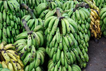 green bananas group at outdoors