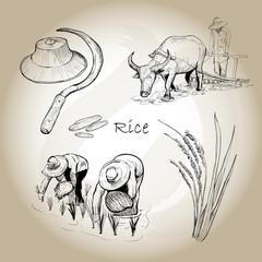 Asian Rice. Hand drawn vector of rice set.