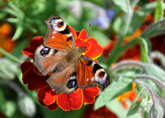 Colorful butterfly on blooming plants