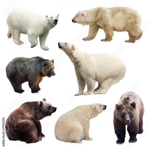 Fototapeten Eisbar Set of bears over white