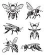 monochrome design of six bees - 71455259