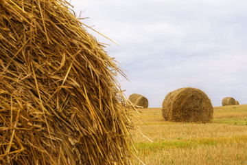 Landscape with straw bales on agricultural  field