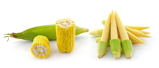 Young small corn  and corn on white background