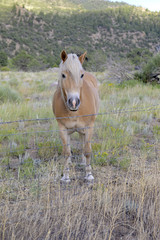 Male horse with blond mane - isolated on ranch