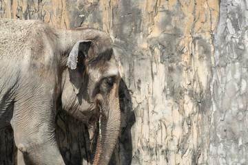 象のポートレート