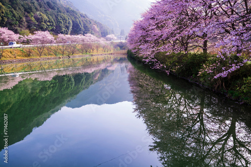 canvas print picture 桜