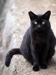お座りする黒猫
