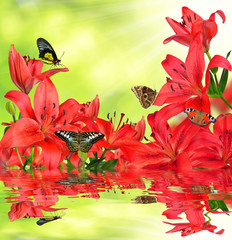 Lily with butterflies on green natural background