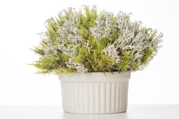 Green and grey moss bunch in ceramic bowl