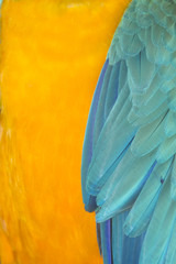 Macaw feathers abstract background