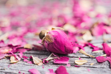 tea rose bud and petals on old wooden table