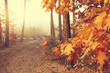 Colorful beautiful autumn in the forest