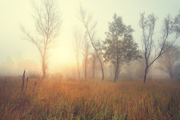 Misty sunny morning in a wild field on the edge of the forest