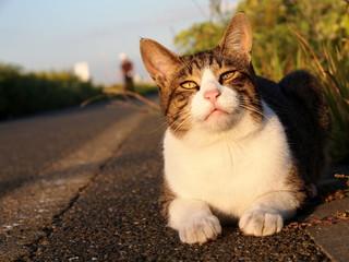 河川敷の野良猫