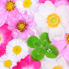 Four-leaf clover with flower background