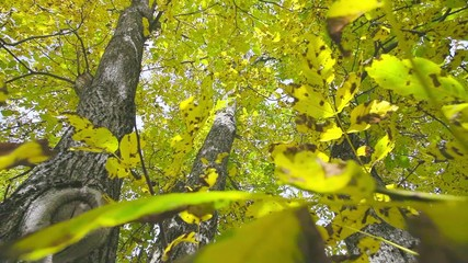 Autumn leaf and trunk