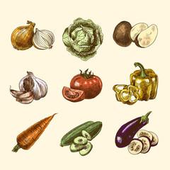 Vegetables sketch set color