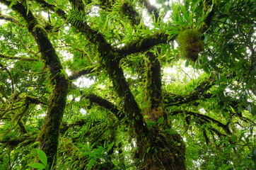 Big trees and fern in the forest primeval