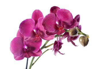 Orchid in flowerpot