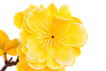 Yellow artificial flowers.