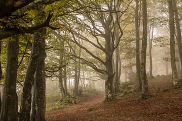 Atmosfera mistica nella foresta