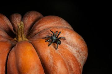 Halloween black yucca