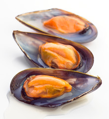 raw shelled mussels