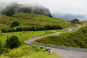 Estrada regional típica dos Açores