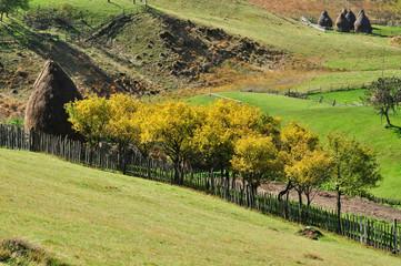 Plum trees at autumn