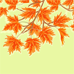 Maple leaves autumm theme green background vector illustration