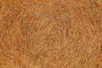 yellow dry wheat straw