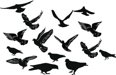 fifteen black pigeons on white background