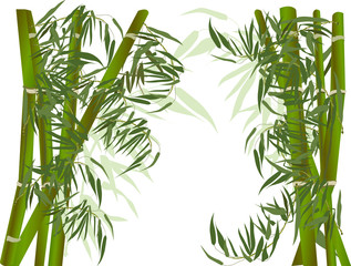 dark and light green bamboo plants