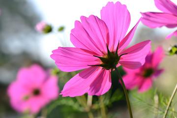 Blumen 330