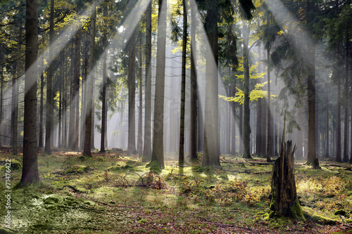 "mystic forest with morning sunbeams Czech republic ""Cesky Les"""