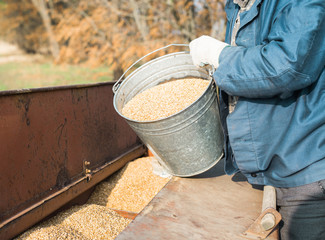 Farmer pours grain