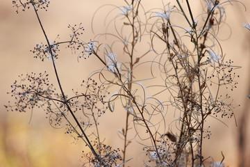 Сухая трава на красивом фоне