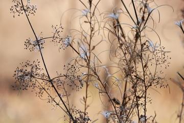 Трава в октябре