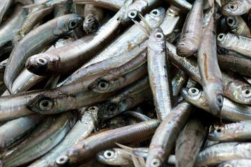 Sardinen - Fischmarkt