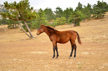 Young horse standing on the lawn on a background of forest