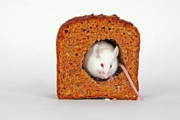 Maus im Brot