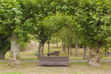 Picnic area. Trees, tables and barbacues in the park
