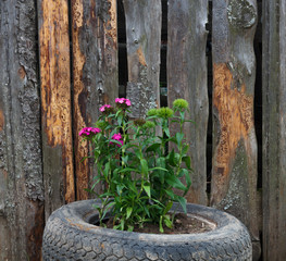 Flower bed near board fence