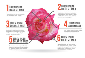 Flower infographic vector illustration
