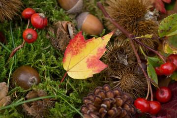 Bunter Herbsthintergrund