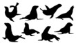 sealion silhouettes - 71491616